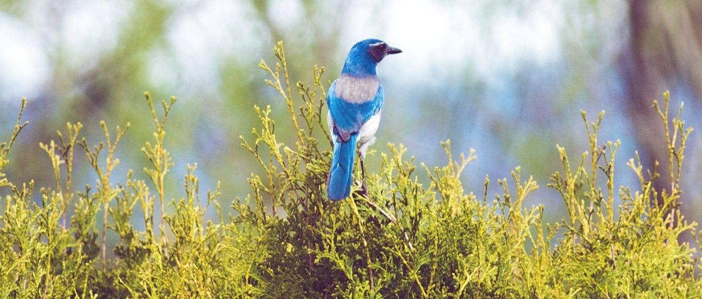 Avoid callbacks in Node js with Bluebird promises | Applandeo Blog